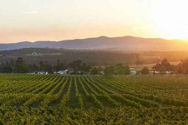 Sirromet Vineyards