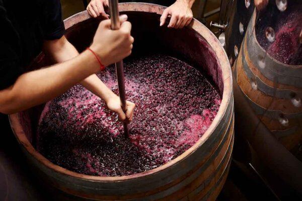 Nuova Scuola Wines
