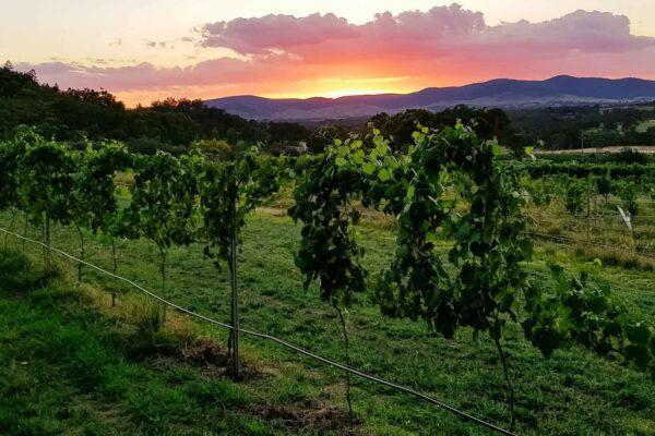 View Wine